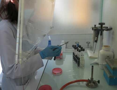 ALFABETO DEL BIOFUTURO: antrace e livelli di biosicurezza