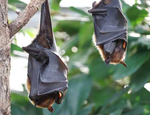 ALFABETO DEL BIOFUTURO: Pipistrelli, Quarantena, Retrovirus