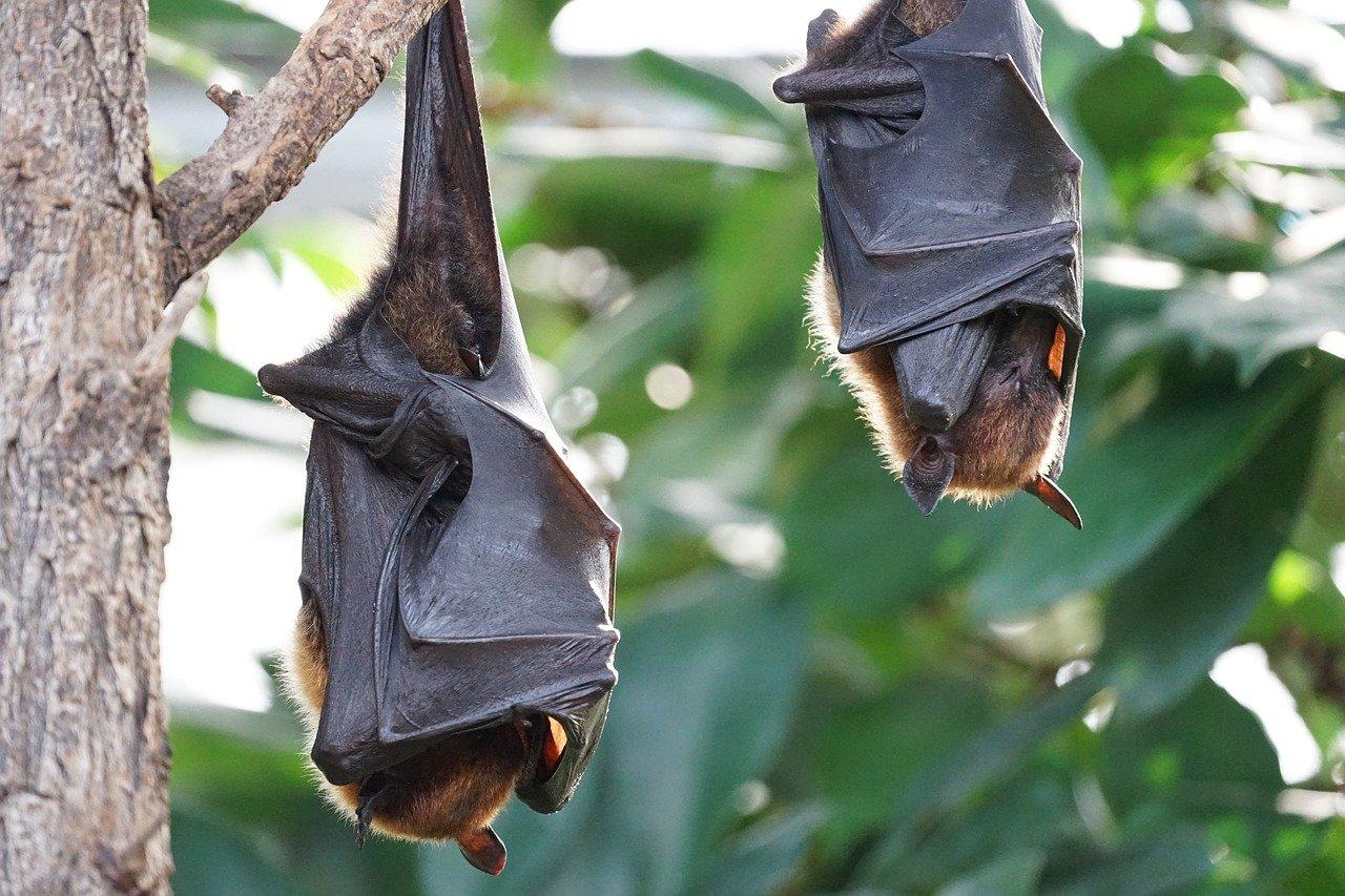 pipistrelli quarantena retrovirus